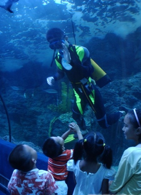 壁纸 海底 海底世界 海洋馆 水族馆 450_622 竖版 竖屏 手机