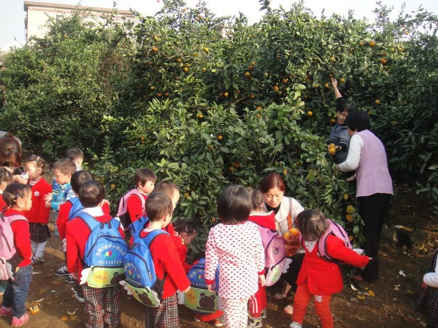 摘橘子咯!_宜春行政中心幼儿园