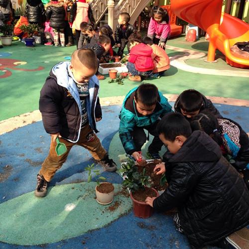 记育苗幼儿园植树节活动